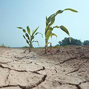 drought-photo